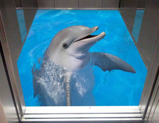 کفپوش سه بعدی کف آسانسور دلفین