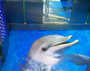 کف پوش سه بعدی با طرح دلفین